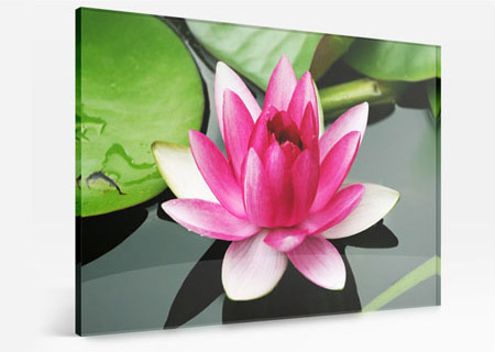 acrylglas lotusblüte